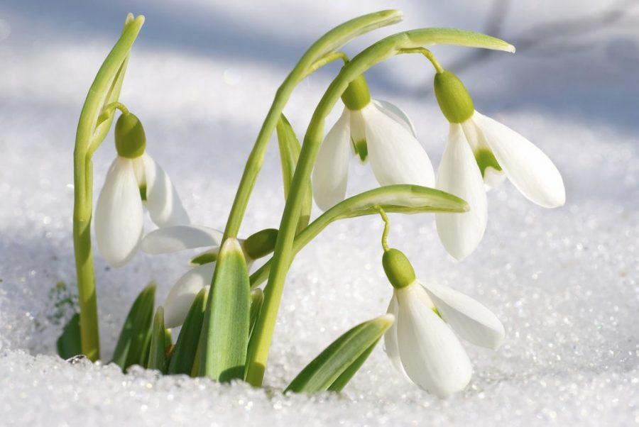 Spring is coming soon! What to do in March and during Easter vacations in Champagny-en-Vanoise